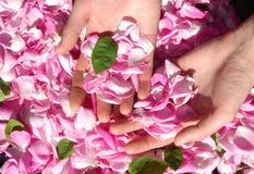 płatek róży zdjęcia royalty free