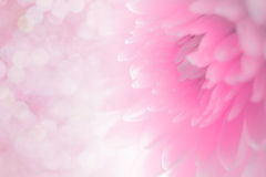 Płatków miękcy cienie słodki cukierki styl showroom obraz royalty free