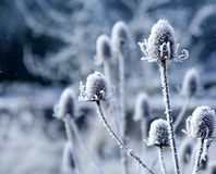 płatka spadać śnieg Fotografia Stock