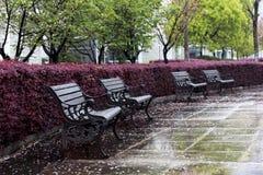 Płatka spadek w wiosna parka krześle Fotografia Royalty Free
