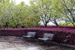 Płatka spadek w wiosna parka krześle Zdjęcie Royalty Free