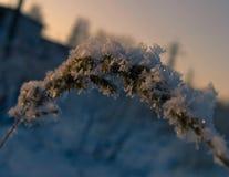 Płatki śniegu na trawie przy zmierzchem na zimy popołudniu Obraz Stock