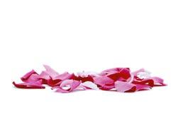 płatki różowią biel Fotografia Stock