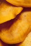 Płatowaty Pomarańczowy grzyb Zdjęcie Stock