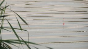 Pławik dla połowów prąć w wodzie podczas gdy łowiący Pławik w wodzie sygnalizuje że ryba gryźć Pławik na zbiory wideo