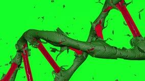 Płodozmienna czerwieni DNA formacja przez obierania ciemnozielona skóra z zielonym tłem ilustracji