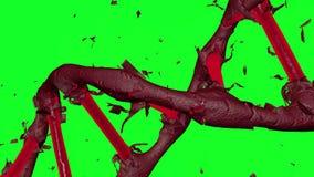 Płodozmienna czerwieni DNA formacja przez obierania ciemnozielona skóra z zielonym tłem ilustracja wektor
