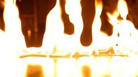 płomień zbiory