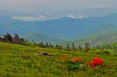 Płomień azalii kwitnienie na wysoka góra wierzchołku. fotografia royalty free