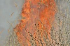 Płomień brushfire 32 zdjęcia stock