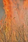 Płomień brushfire 28 zdjęcie royalty free