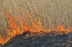 Płomień brushfire Zdjęcie Royalty Free