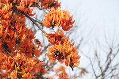 Płomień las Zdjęcie Royalty Free