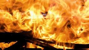 Płomienia ognisko od różnorodność gałąź w górę swobodny ruch zbiory wideo