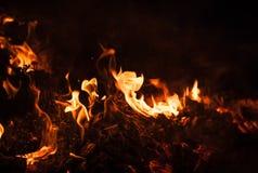 Płomienie ognisko przy nocą Zdjęcie Royalty Free