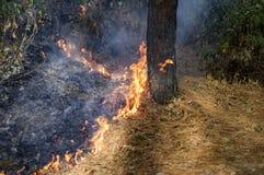 Płomienie pożar Obraz Stock