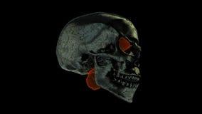 Płonąca czaszka zdjęcie wideo