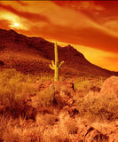 płonąca pustyni Zdjęcie Royalty Free