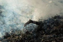 Płonący dym od suchego liścia drzewnego kija i obrazy stock