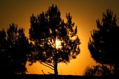 płonący krzew Obrazy Royalty Free