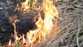 płonący ogień zbiory