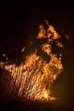 płonący pole Obraz Royalty Free