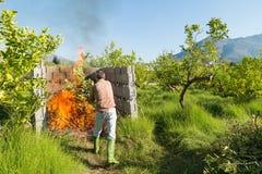 Płonący przycina odpady Obrazy Stock