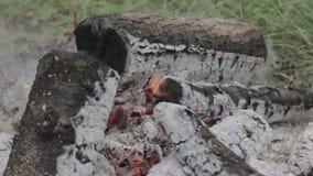 płonący węgiel drzewny zdjęcie wideo