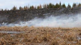 Płonie ogień w polu zbiory