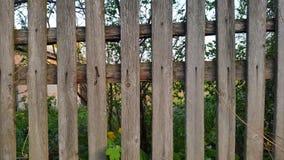 płotowi lata łąkowi słoneczniki drewniane Drewniany tło struktura Obraz Royalty Free