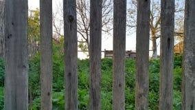 płotowi lata łąkowi słoneczniki drewniane Drewniany tło struktura fotografia royalty free
