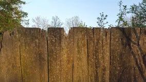 płotowi lata łąkowi słoneczniki drewniane Drewniany tło struktura Zdjęcia Stock