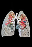 płuca zdjęcie royalty free