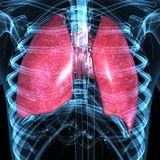 Płuca i serce ilustracja wektor