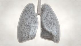 Płuca Konstruują, oskrzela i Alveoli ilustracji