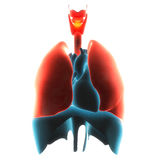 Płuco organu ból ilustracja wektor
