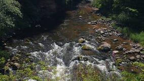 Płytcy rzeczni gwałtowni w lesie zdjęcie wideo