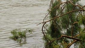 Płytka lasowa rzeka z spadać conifer drzewem zbiory