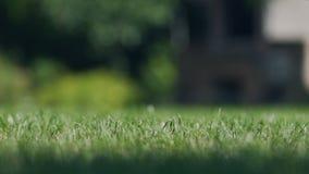 Płytka ostrość zielona trawa w podwórza lata tła plenerowym miejscu dla reklamy zbiory