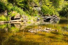 Płytka rzeka otaczająca luksusowym ulistnieniem w appalachians obrazy stock