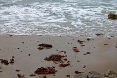 PŁYTKI FOAMY SEAWATER BACKWASH zdjęcie royalty free