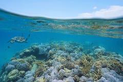 Płytkiej rafy koralowa denny żółw i rybi podwodny obraz royalty free
