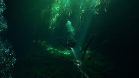 Pływać z latarką w zmrok jamach Jukatan cenotes podwodni w Meksyk zbiory wideo