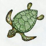 Pływacki denny żółw ilustracji