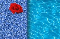 Pływackiego basenu i czerwieni róża na dachówkowym ideale Obraz Royalty Free