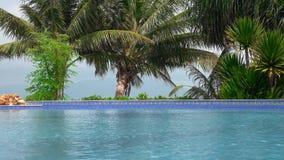 Pływackiego basenu powierzchnia z drzewkami palmowymi zbiory