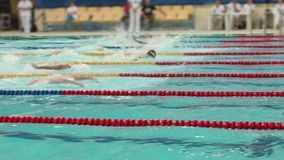 Pływackiego rywalizacja stylu motyli mężczyzna, koniec zdjęcie wideo