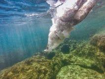 Pływaczka znurza się w morze Fotografia Royalty Free