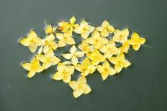 pływający kwiat Zdjęcie Royalty Free
