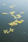 pływający kwiat Zdjęcia Royalty Free